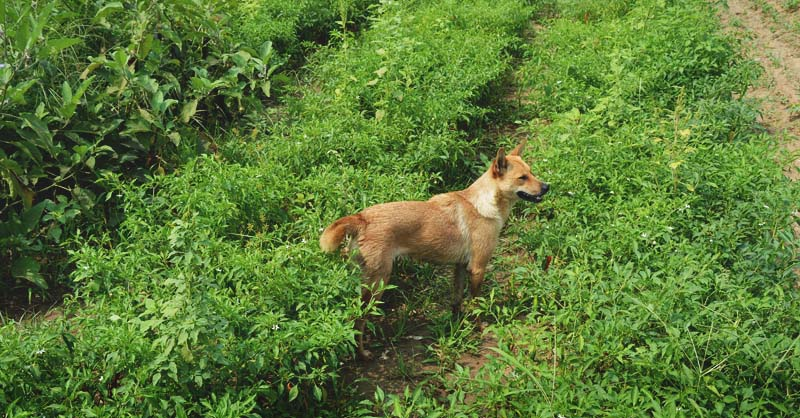 6-Reasons-to-Get-a-Farm-Dog-and-5-Reasons-You-Might-Not-FI-1.jpg