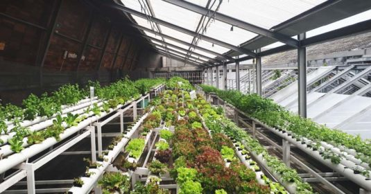 9 Important Tips for Growing a Greenhouse Garden