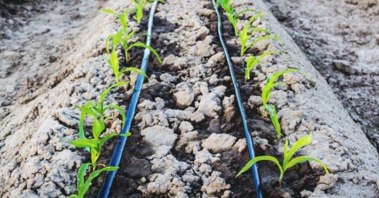 Everything You Ever Wanted to Know About Drip Irrigation