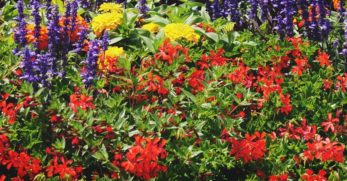 How to Start a Cut Flower Bed in Your Vegetable Garden