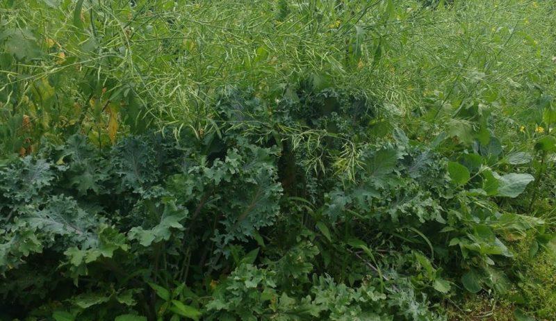 long term cool season crop protection ideas