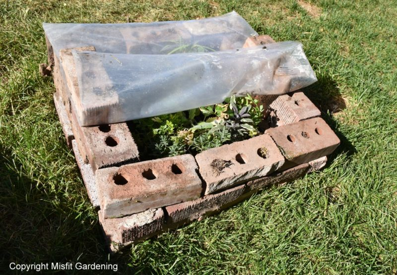 extremely budget friendly diy cold frame
