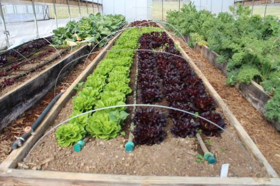 13 DIY Options for a Drip Irrigation System to Save You ...