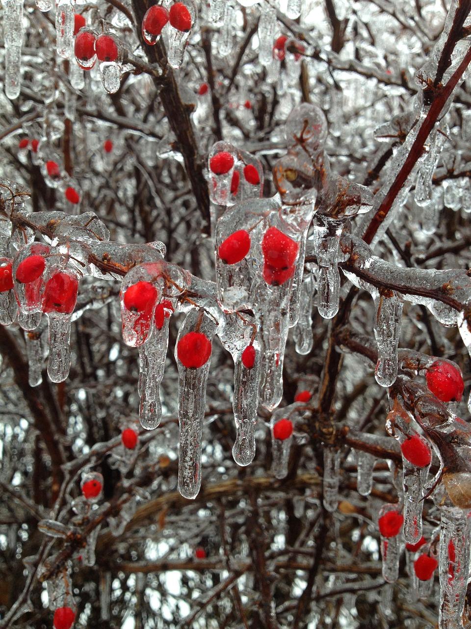 frost can impact biennial bearing