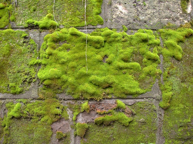 20 Types Of Moss To Consider For Your Next Garden Project