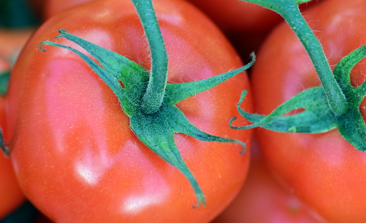 tomatoes for healthy gardening