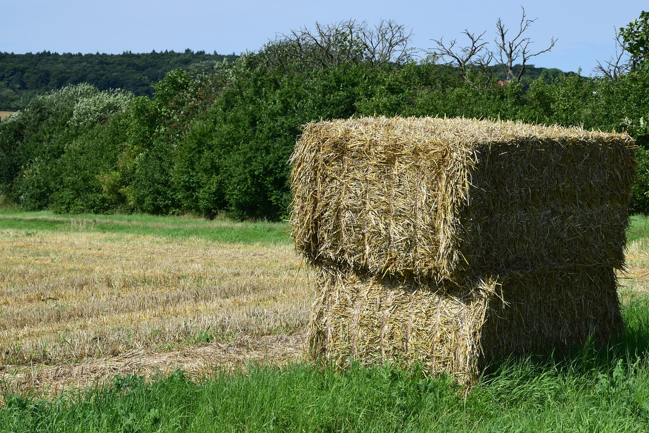 Straw bale gardening can be considered when you evaluate gardening methods