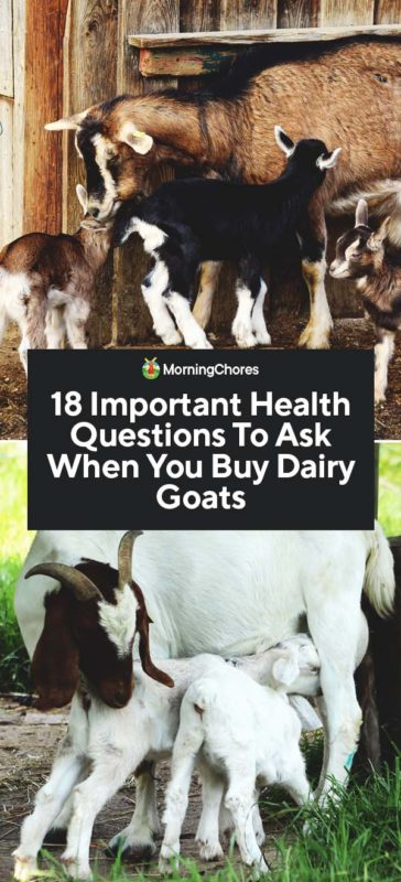 18 Important Health Questions To Ask When You Buy Dairy Goats