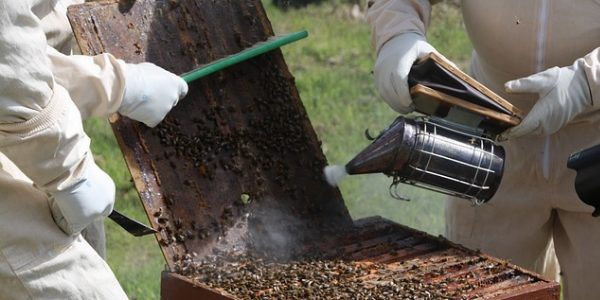 A smoker is needed to get started with honeybees