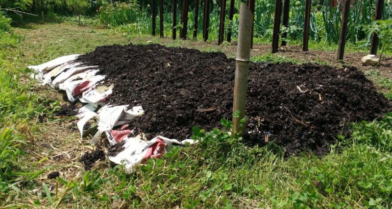 Ways to use leaf mold to recover a weedy garden bed