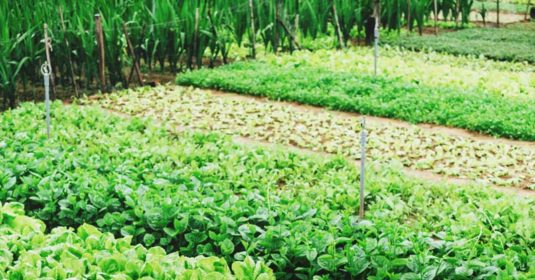 How to Extend Your Cool Season Crops and Spare Your Soil Despite the Heat