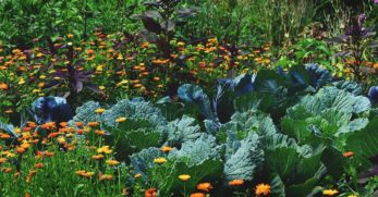 5 Best Pesticide Reviews for Controlling Troublesome Garden