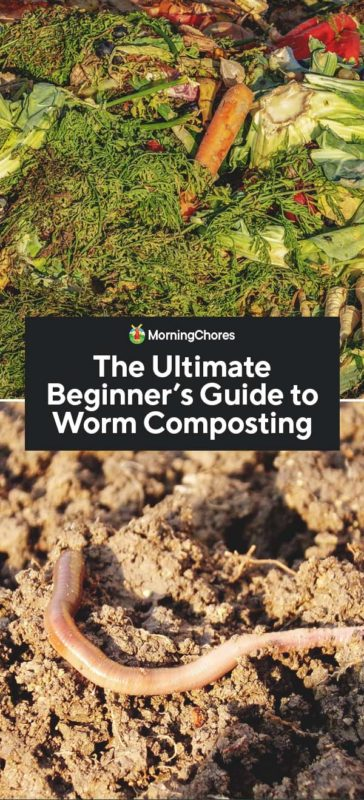 This image has an empty alt attribute; its file name is The-Ultimate-Beginner's-Guide-to-Worm-Composting-PIN-364x800.jpg