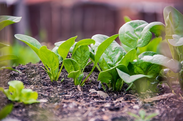 18 Winter Vegetables and the Best Varieties for Cold Climates