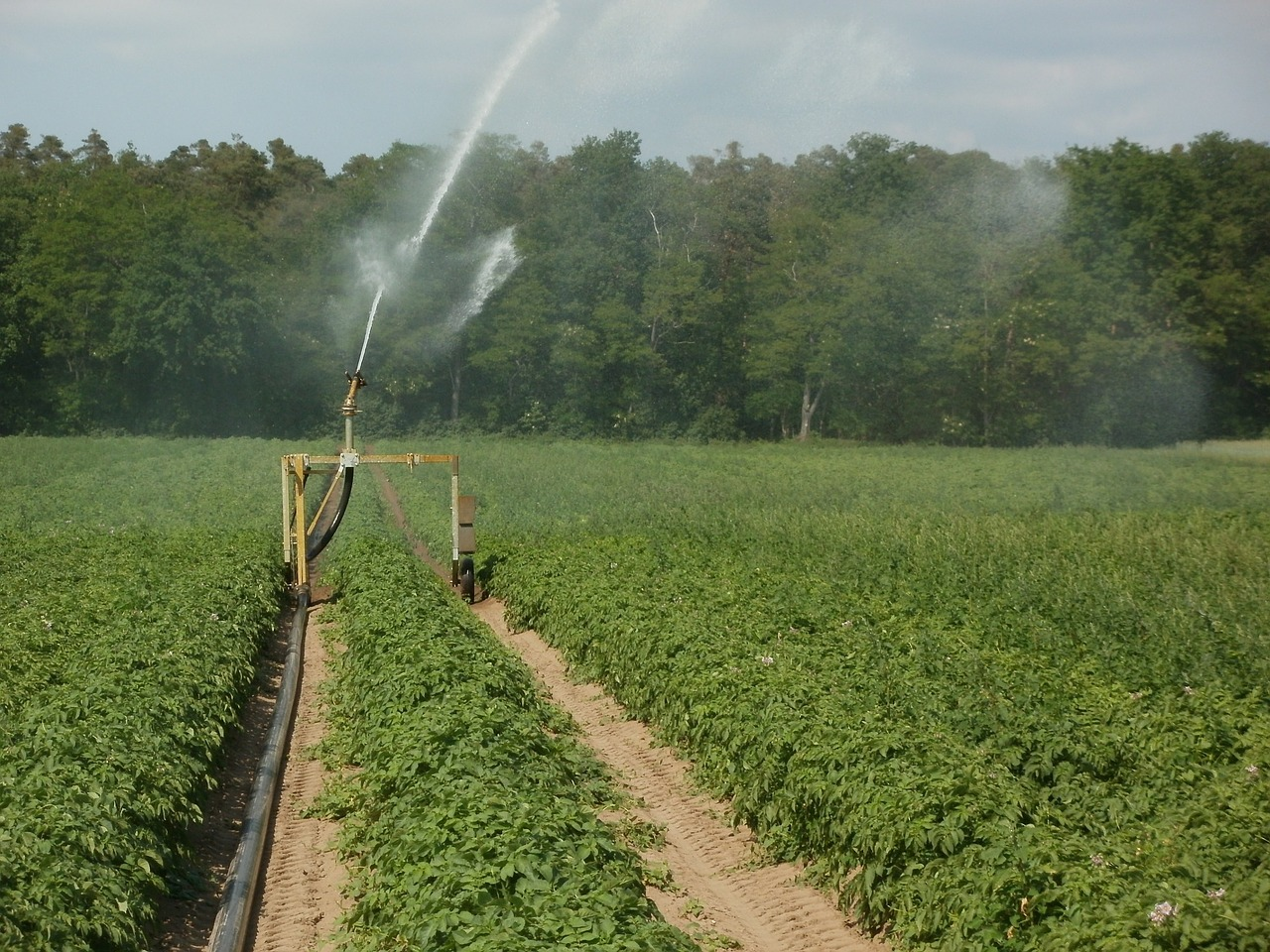 large scale spray irrigation