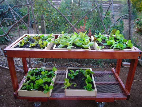 salad bench