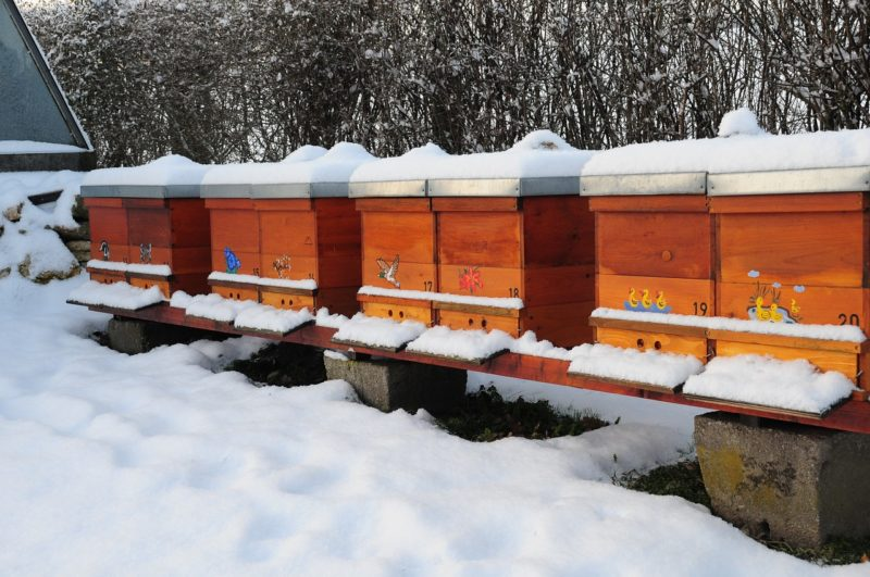 Managing a beehive during winter includes extra precautions