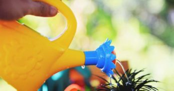 10 Frugal Automatic Watering Systems Your Potted Plants Will Love