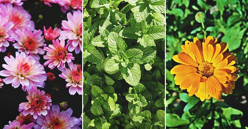 13 Plants That Keep Spiders Away