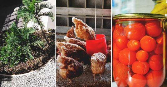 20 Tips to Help You Become a Minimalist Homesteader