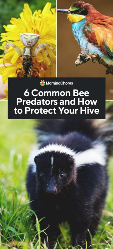 This image has an empty alt attribute; its file name is 6-Common-Bee-Predators-and-How-to-Protect-Your-Hive-PIN-364x800.jpg