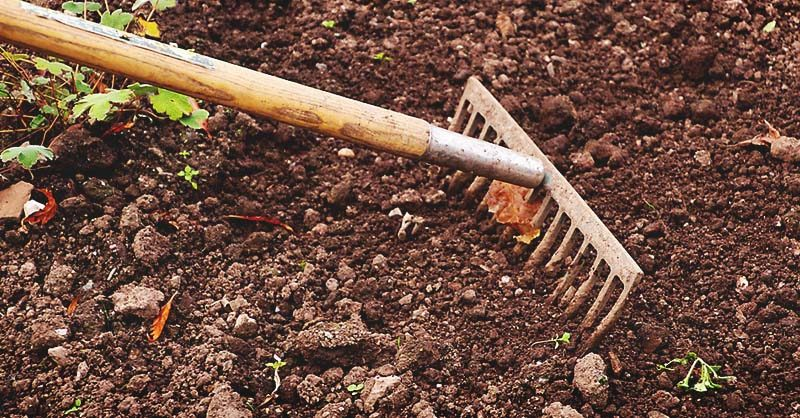 6 Types of Soil and Which Plants Grow Best on Them