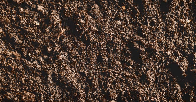 Acidic Soil What It Means And How To