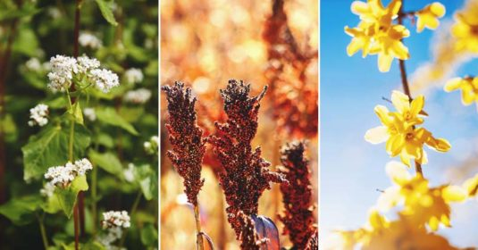Allelopathic Plants: What Are They, The List, and How To (and Not To) Use Them