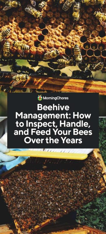 This image has an empty alt attribute; its file name is Beehive-Management-How-to-Inspect-Handle-and-Feed-Your-Bees-Over-the-Years-PIN-364x800.jpg