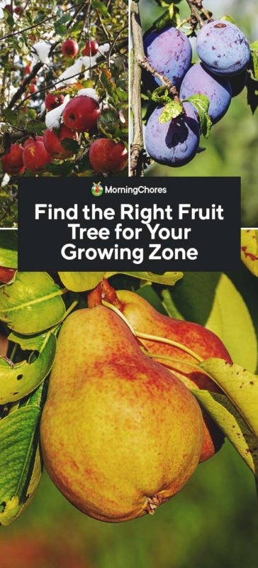 This image has an empty alt attribute; its file name is Find-the-Right-Fruit-Tree-for-Your-Growing-Zone-PIN-364x800.jpg