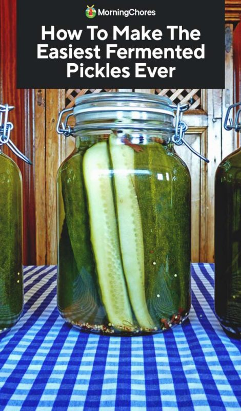 This image has an empty alt attribute; its file name is How-To-Make-The-Easiest-Fermented-Pickles-Ever-PIN-470x800.jpg