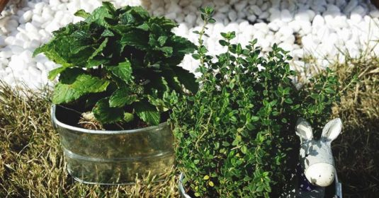 Olla Irrigation System: A Water-Wise Way to Irrigate Small Gardens