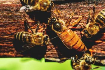 5 Black Small Bee Hive Beetle Blaster BeeHive Trap Beekeeping Equipment  Nu