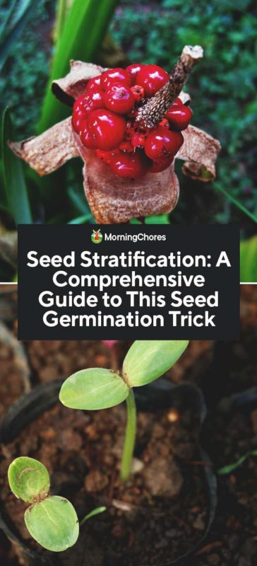 This image has an empty alt attribute; its file name is Seed-Stratification-A-Comprehensive-Guide-to-This-Seed-Germination-Trick-PIN-364x800.jpg
