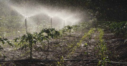 Spray Irrigation System: How Does It Work, Sprinkler Types, Pros, and Cons
