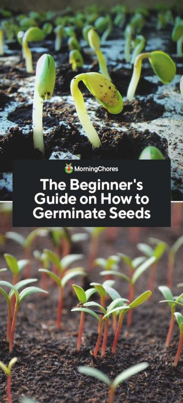 This image has an empty alt attribute; its file name is The-Beginners-Guide-on-How-to-Germinate-Seeds-PIN-364x800.jpg