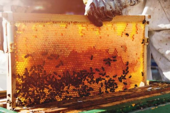 The Practical Guide on How to Start Beekeeping for Beginners