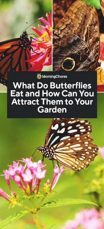 This image has an empty alt attribute; its file name is What-Do-Butterflies-Eat-and-How-Can-You-Attract-Them-to-Your-Garden-PIN-364x800.jpg