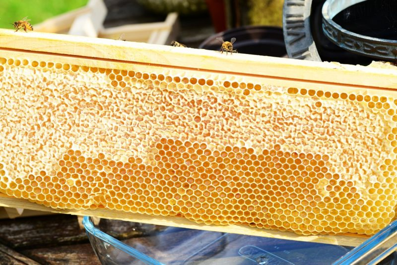 before harvesting honey and beeswax