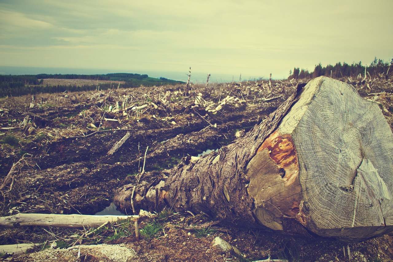 Deforestation as beekeeping problems