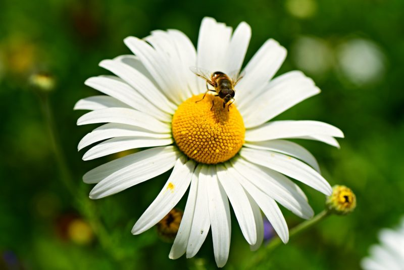 choosing the right flowers helps with beekeeping in a bee garden