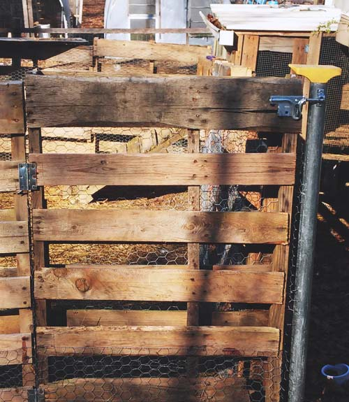 A sturdy gate is needed to confine goats