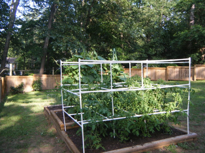 tomato cage PVC pipe projects