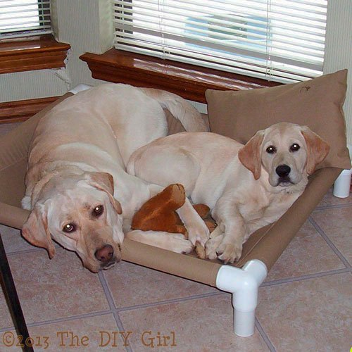 Doggie PVC pipe projects