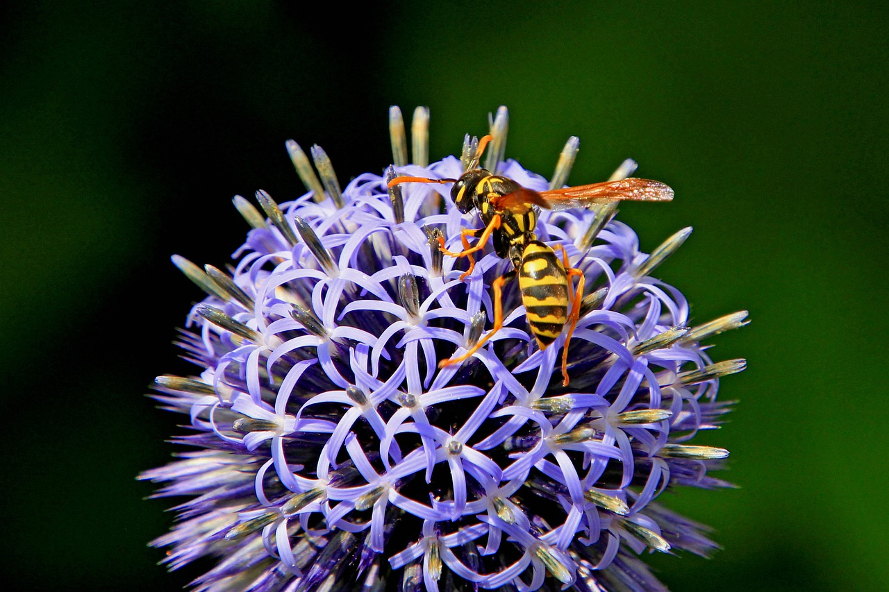 Wasp pollinating a flower