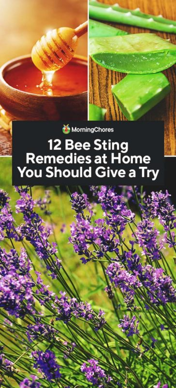 This image has an empty alt attribute; its file name is 12-Bee-Sting-Remedies-at-Home-You-Should-Give-a-Try-PIN-1-364x800.jpg