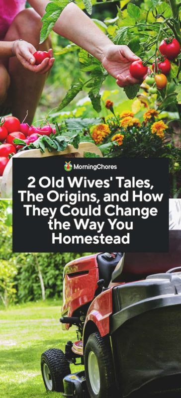 This image has an empty alt attribute; its file name is 2-Old-Wives-Tales-The-Origins-and-How-They-Could-Change-the-Way-You-Homestead-PIN-364x800.jpg