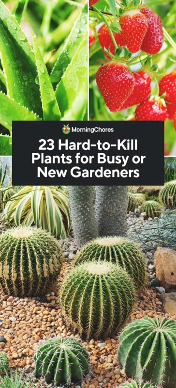 This image has an empty alt attribute; its file name is 23-Hard-to-Kill-Plants-for-Busy-or-New-Gardeners-PIN-1-364x800.jpg