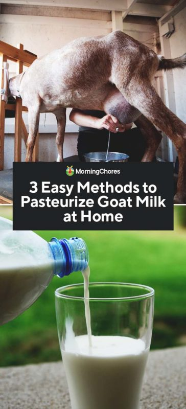 This image has an empty alt attribute; its file name is 3-Easy-Methods-to-Pasteurize-Goat-Milk-at-Home-PIN-364x800.jpg