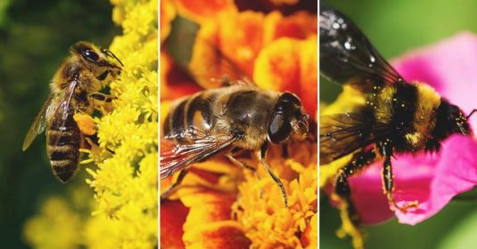 5 Most Common Breeds of Honey Bees and Which is Right for You